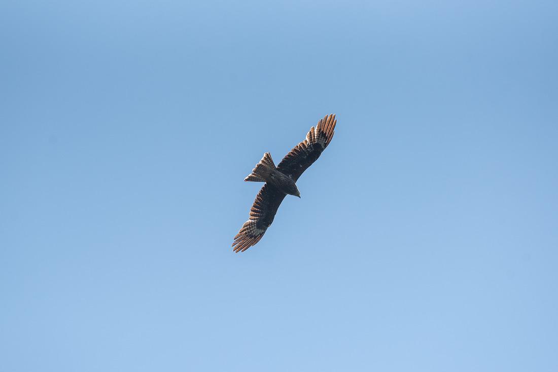 Полет орлана